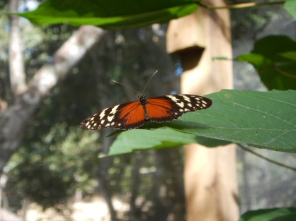 Butterfly hatchery near Copan, Honduras