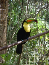 Bird Sanctuary near Copan, Honduras